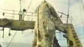 Drangon gigante encontrado en el mar de Japon INCREIBLE DRAGON