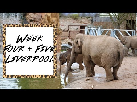 Liverpool Vlog - Week 4 & 5 | I Went To Chester Zoo!