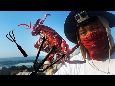 Video Catch your own fishing bait! NINJA CLAW VS JUMPING CRABS download in MP3, 3GP, MP4, WEBM, AVI, FLV January 2017