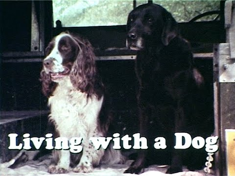 Living With A Dog, 1977