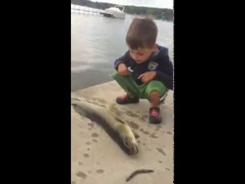 小男孩為死魚悲傷 下一秒老爸爆笑