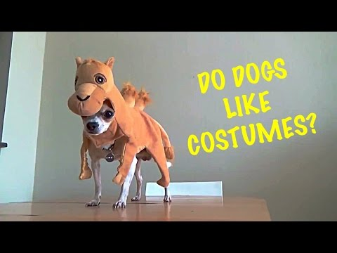 Do dogs like costumes?