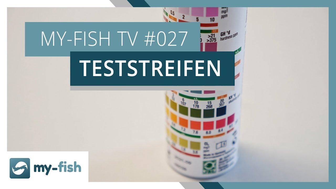 my-fish TV - Deine Nr. 1 Anlaufstelle für alle Themen rund um die Aquaristik 37