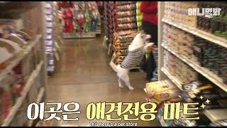 Video Wow.. I saw a dog pushing a cart at a supermarket... MP3, 3GP, MP4, WEBM, AVI, FLV Mei 2018