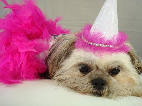 ✂ Dog Top Hat: How To Make Cheap Party Theme Birthday Hats For Pets ♡