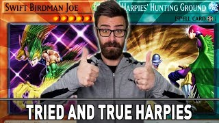 Tried And True Harpies! | YuGiOh Duel Links Mobile & Steam W/ ShadyPenguinn