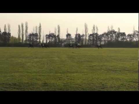 Palo Alto Polo Club  Crash horses