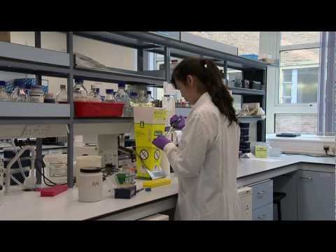 Profil eines Doktoranden
