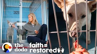 Scared Shelter Dog Is So Lucky She Met This Woman | The Dodo Faith = Restored by The Dodo