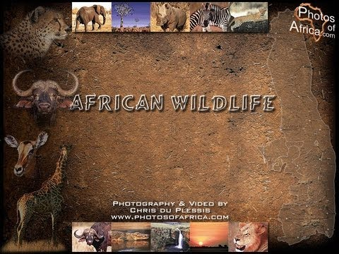 wildlife - Africa is a new landmark series that takes you on a journey through this vast and diverse continent as it has never been seen before. The world's second larg...
