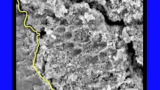 ALH 84001 and Other Martian Meteorites
