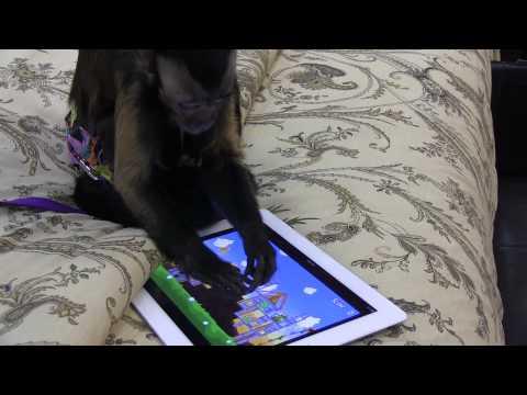 0 Les animaux jouent avec des tablettes et des smartphones