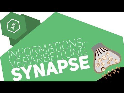 Synapse - Informationsverarbeitung ● Gehe auf SIMPLECLUB.DE/GO & werde #EinserSchüler