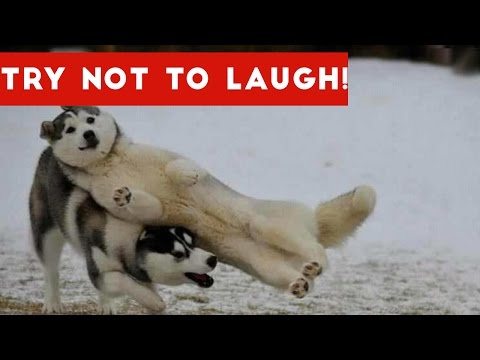 Try Not To Laugh At This Funny Dog Video Compilation | Funny Pet Videos (видео)