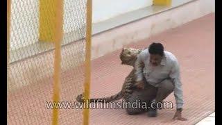 Video Leopard encounter in India MP3, 3GP, MP4, WEBM, AVI, FLV September 2018