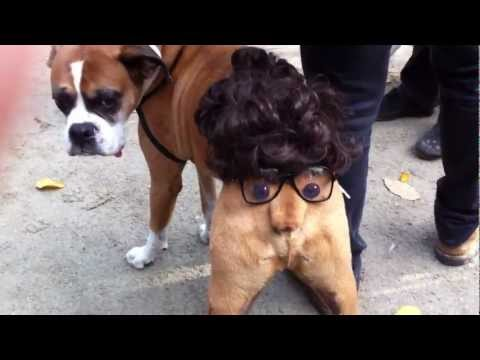 Halloween Dog Butthead Costume