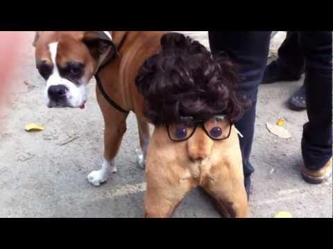 萬聖節該怎麼幫狗打扮呢?!把屁股變成一張臉的小創意令全場驚艷!