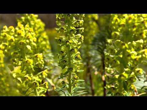 Garden Visit, The Savill Garden, Egham, Surrey in May