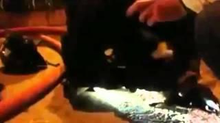 Santiago del Cile, un cane rimasto intossicato dal fumo divampato in una abitazione è stato salvato dal pronto intervento di un pompiere che senza pensarci due volte si è precipitato a soccorrere l'animale con massaggio cardiaco e respirazione bocca a bocca.