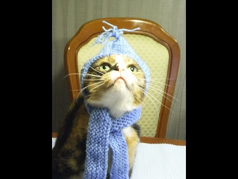 Dog Fashion*Hunde Mütze mit Schal*Dogs cap with scarf knitting*Dog Fashion*Tutorial Handarbeit
