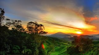 Cameron Highlands Malaysia  city pictures gallery : Cameron Highlands 2015 - Full HD
