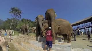 Elephant Nature Park - Thailand Chiang Mai Jan 2013