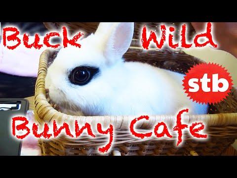 """Man visits a """"kawaii as fuck"""" rabbit cafe in Tokyo"""