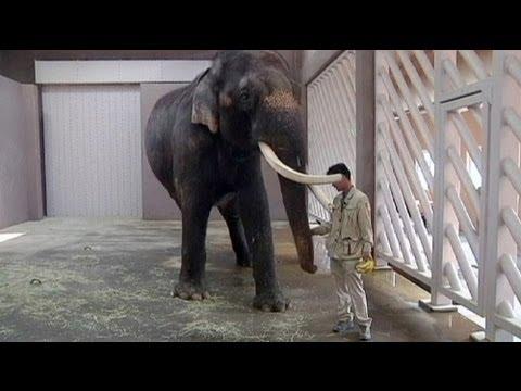 قصة مصورة: فيل  ينطق بعض الكلمات باللغة الكورية