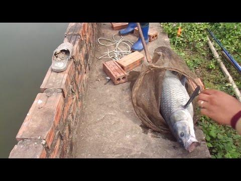 ►[Đồ Câu Hải Đăng]Test mồi câu hải...