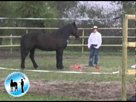 comment gagner la confiance d'un cheval