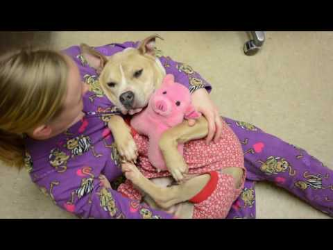 This Animal Shelter is Encouraging Adoptions With Doggy Sleepovers
