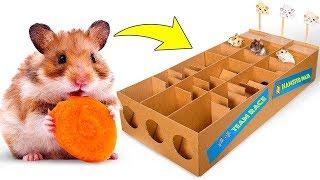 Nouveau Parcours De Course De Hamster En Carton Pour Trois Mignons Petits Hamsters 🐹🥇