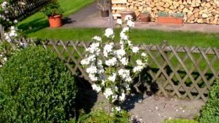 #343 Pflanzidee für Maloni Miniäpfel