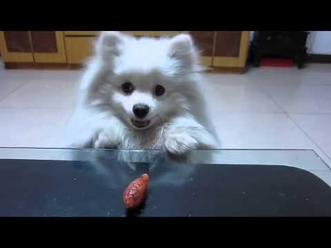il-cane-che-vuole-con-tutto-se-stesso-la-salsiccia-119