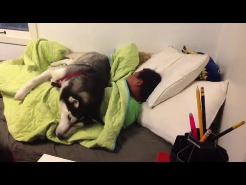 WATCH: Dog battles Mom to keep boy in bed
