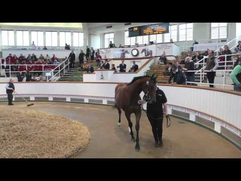 Tattersalls October Yearlings Sale Book 1 Day 2 2015 Video Review