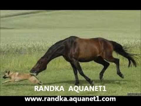 EXTRA POLSKIE RANDKI INTERNETOWE UK PL USA POLISH ONLINE DATING RANDKA INTERNETOWA AQUANET1