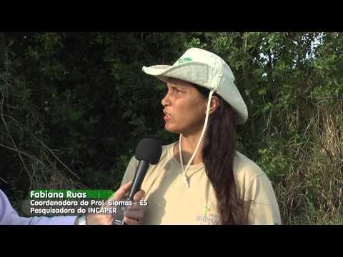 Produção de aroeira no Projeto Biomas da Mata Atlântica