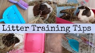 Download Lagu Guinea pig LITTER TRAINING TIPS! | Hamster HorsesandCats Mp3