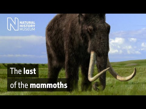 The last of the mammoths