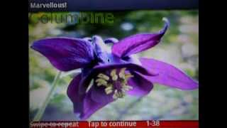 Wild Flowers 1 FREE YouTube video