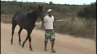 um cavalo de raça pura inglês, desfilando e correndo com seu dono.Tá a fim de encarar? Pode vim, esse é bom. contato: anaelton_ds@hotmail.com musica: Não Vou...