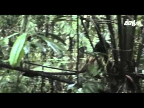 VTC14_Cuộc sống biệt lập của thổ dân Amazon