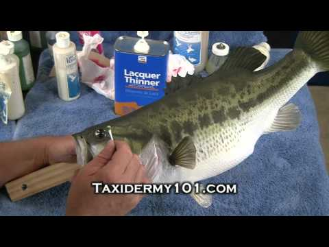 How To Taxidermy Video – Fish Taxidermy Video – Bass Taxidermy
