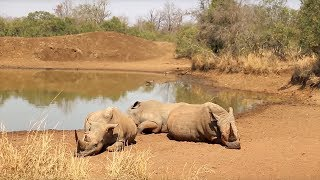 Top Safari Parks in Swaziland ►Subscribe and click the bell to enable notifications for my new videos: http://bit.ly/DBH-SUB ►Read the blog: http://davidsbee...