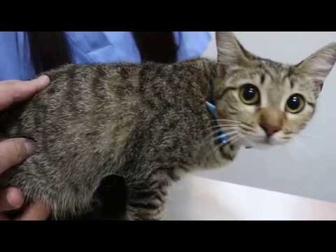 Anaesthesia of xylazine + ketamine for spaying a 6-month-old cat