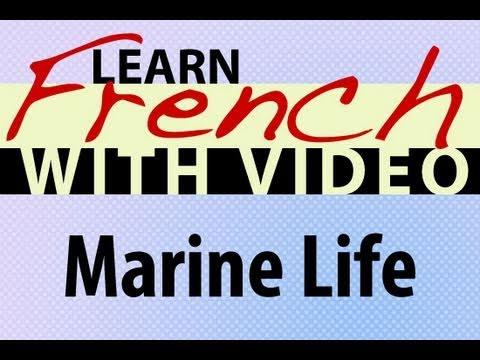 Die See - Französische Vokabeln