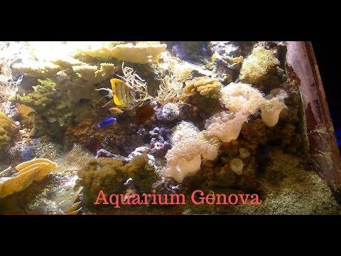 VISITE GRAND AQUARIUM GENOVA ( ITA )_Akvárium