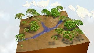 Modos de restaurar as florestas