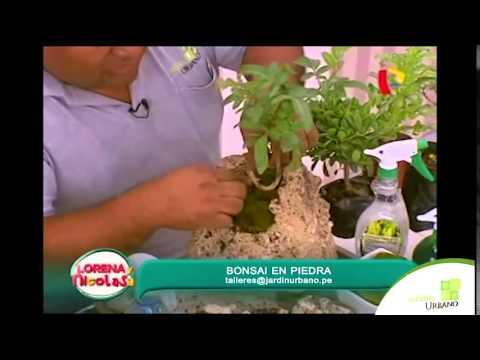 Como poner un bonsai en piedra